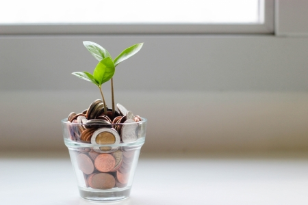 A plant growing in cup of coins to show sustainable finance